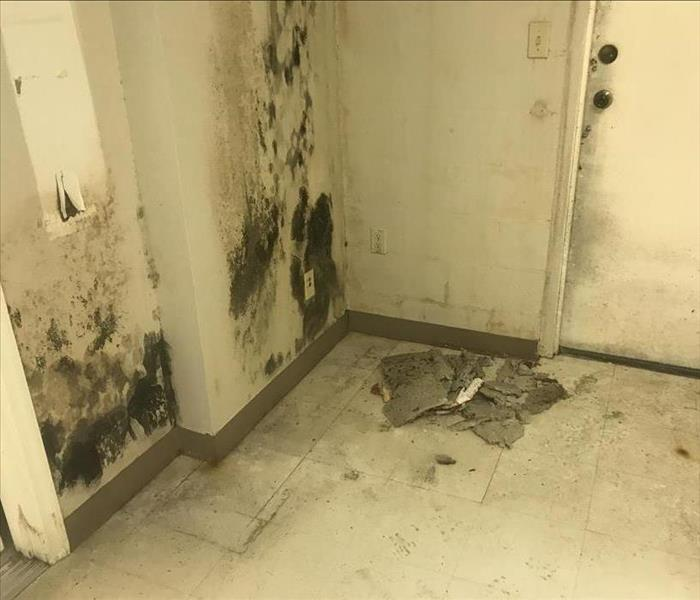 Mold Remediation Does Your Ocala Home Have A Mold Problem?