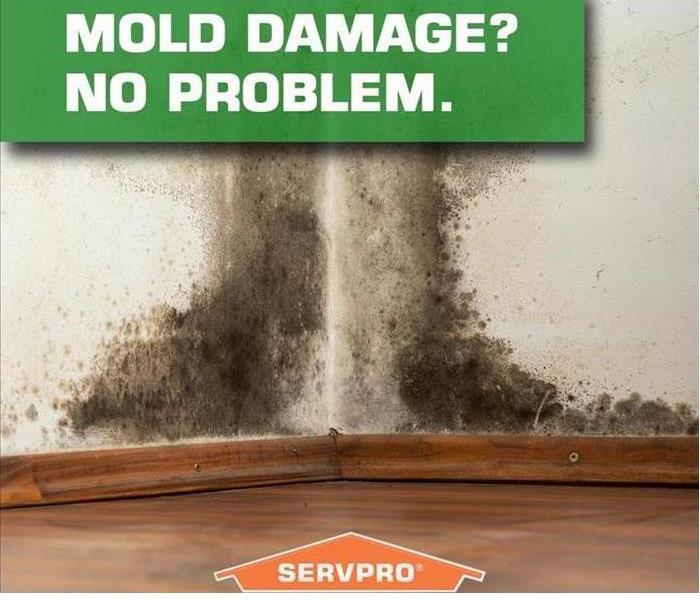 Mold Remediation Mold Mitigation & Remediation Process